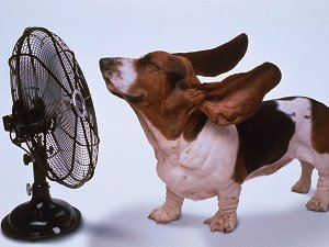 Dog and Fan
